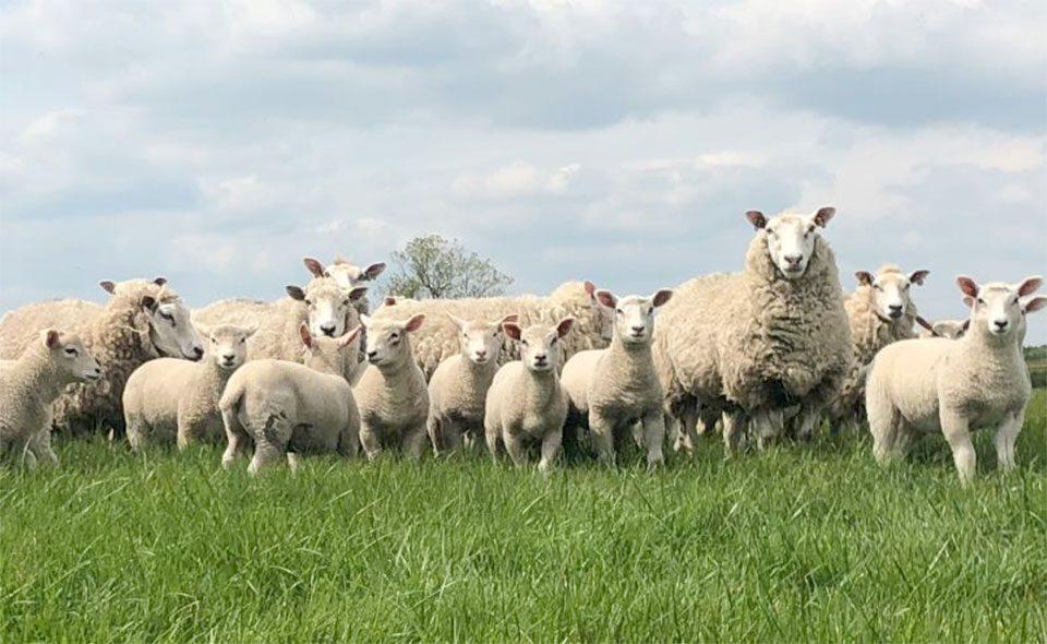 Veterinary Consumables