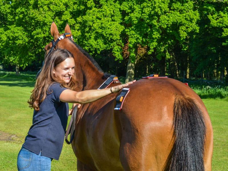 Equine gait analysis